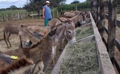 Animais sendo alimentados após serem encontrados em situação de maus-tratos