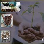 Alunos do Campus do Sertão fazem compostagem para fertilizar solos