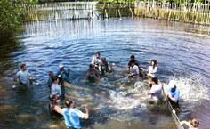 Soltura do peixe-boi Assú, em setembro de 2013 (foto de Patrícia Savaget)