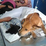 Medicina Veterinária e OAB firmam parceria para projetos com pequenos animais