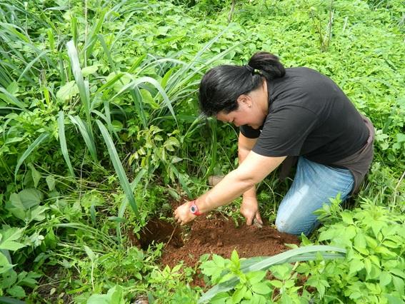 Trabalho da Ufal recupera nascentes no município de Maravilha