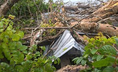 Árvore caiu no teto do Ichca