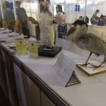 Museu de História Natural da Ufal expõem ecossistemas locais na SBPC Jovem