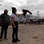 Palestra sobre falcoaria reuniu diversas crianças e adultos na SBPC Jovem