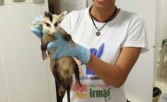 Joyce de Lima sempre gostou de animais