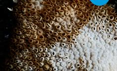 Campanha de estudante da Ufal mostra branqueamento dos corais