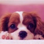 Médica veterinária adverte: cães e gatos devem ser evitados como presente