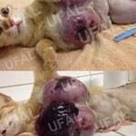 Pesquisa da Ufal alerta sobre venda indevida de remédio para cães e gatos