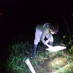 Pesquisa da Ufal desenvolve chave de identificação para girinos da Mata Atlântica