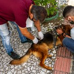 Programa de Acolhimento de Animais vacina 150 cães em Bebedouro