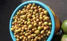 Fruta araça, já comercializada pelos agricultores de Piaçabuçu, também é foco do projeto sobre Pancs