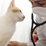 Ufal é referência na pesquisa sobre hiperplasia mamária em felinos