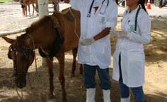 Ações Medicina Veterinária Ufal