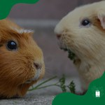 Comitê de Ética abre prazo para representantes de Sociedade de Animais